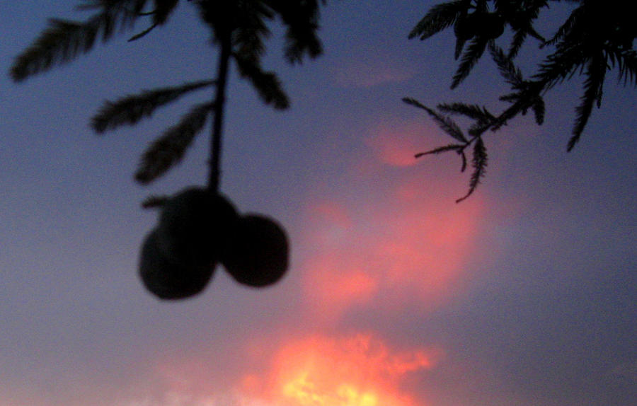 Tree Photograph - Low Hanging Fruit by Juliana  Blessington