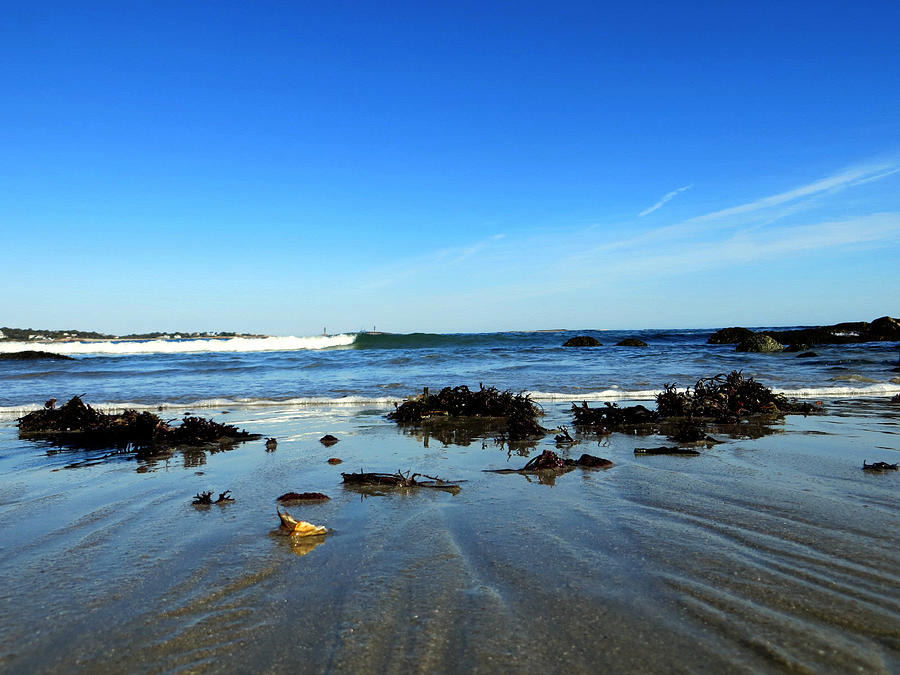 Seashore Photograph - Low Tide On Long Beach by Pamela Turner