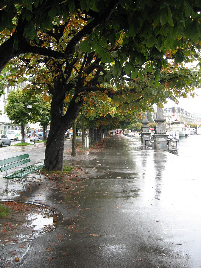 Lucerne Tree Lined Street Photograph