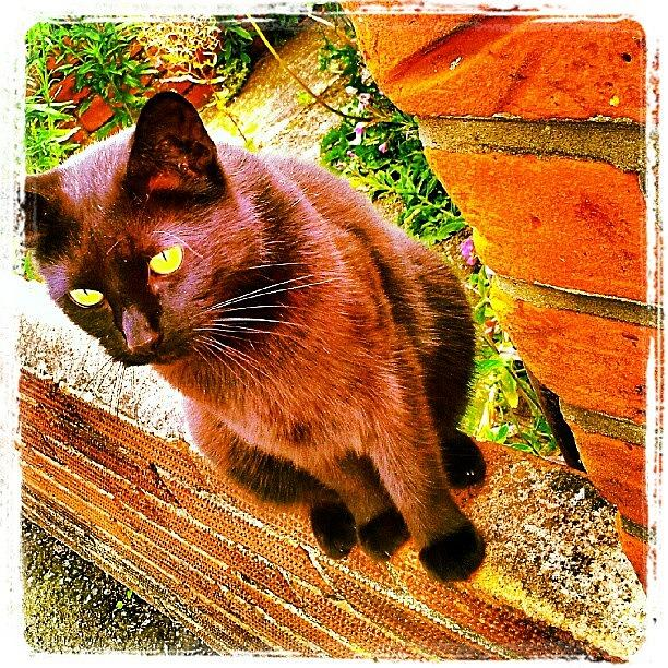 Eyes Photograph - Lucky #cat #catsofinstagram #instacat by Invisible Man