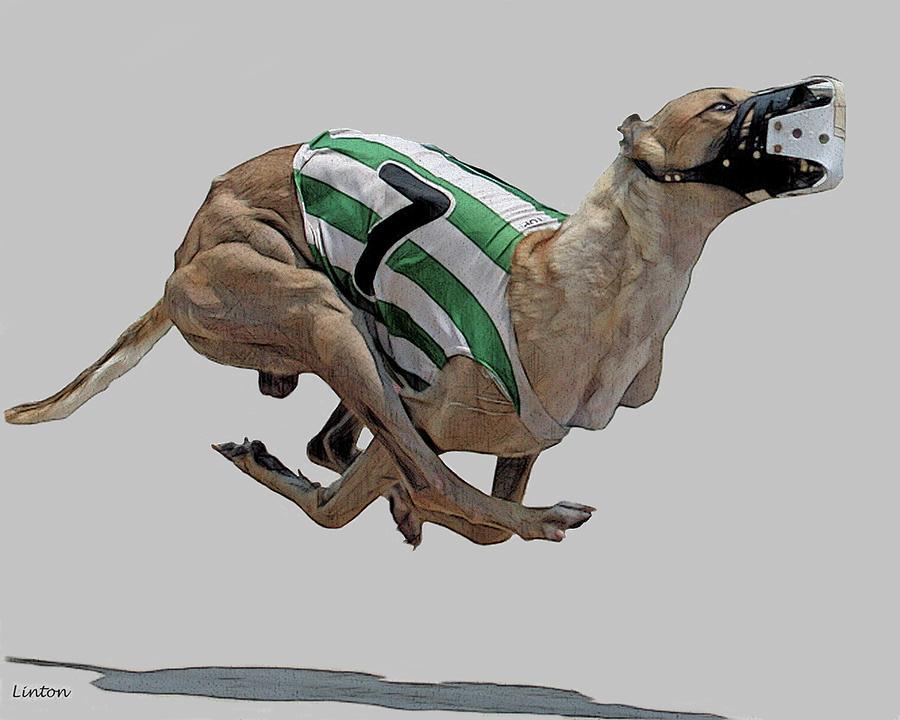 Grayhound Digital Art - Lucky Seven by Larry Linton