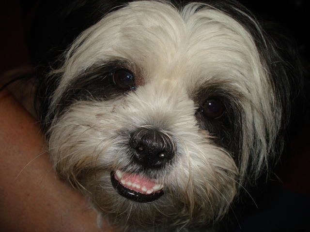 Dog Photograph - Lucky by Val Oconnor
