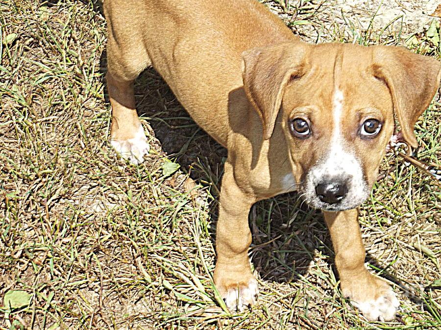 Dog Photograph - Lucy Diamond by Angela Dalporto
