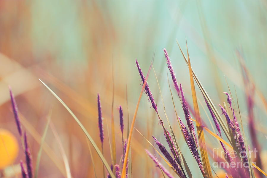 Grass Photograph - Luminis - S07b by Variance Collections