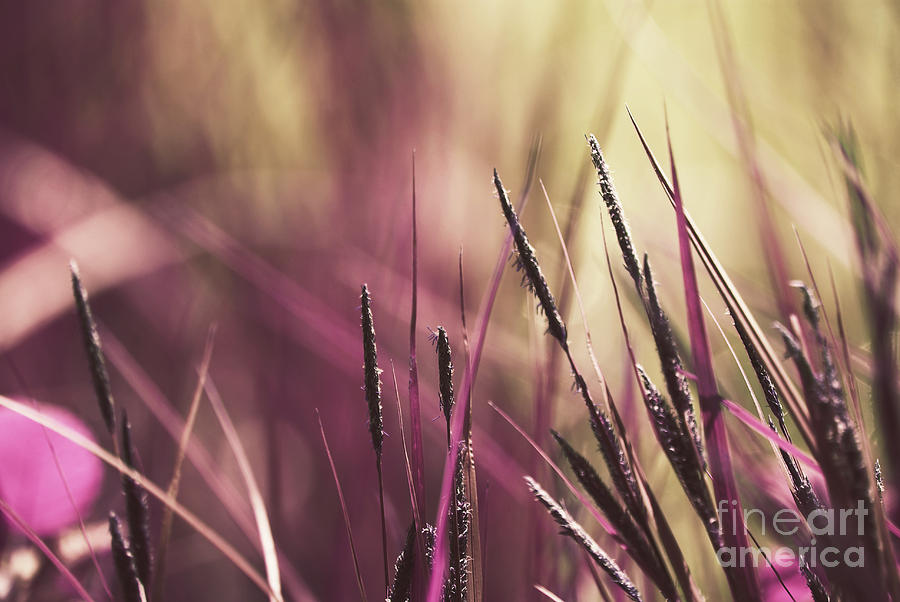 Nature Photograph - Luminis 02 - S11a by Variance Collections