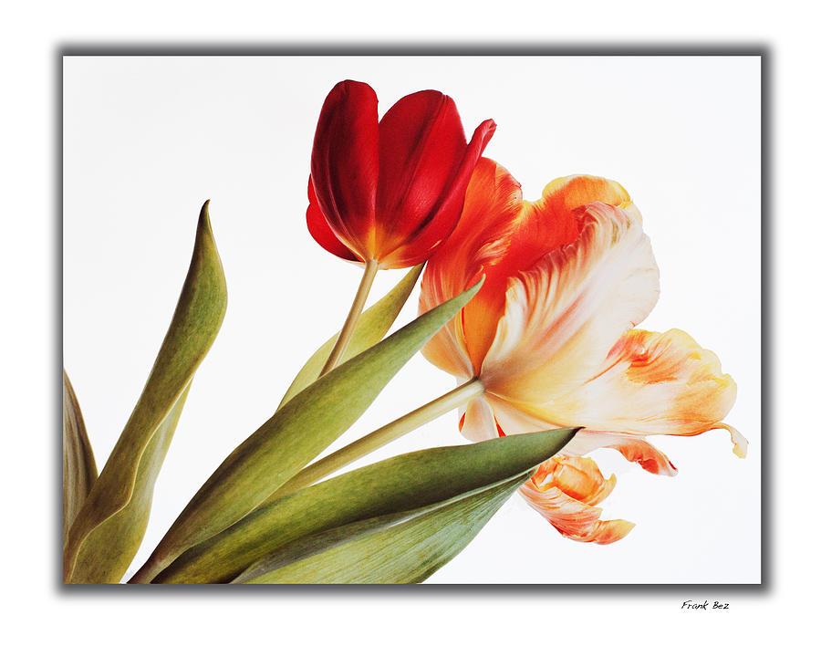 Luminous Flowera 5 Photograph by Frank Bez