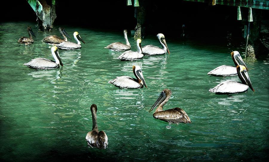 Pelican Photograph - Lunch Crowd by Ellen Heaverlo