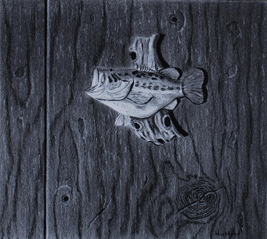 Still Life Drawing - Lunker by Brian Hustead