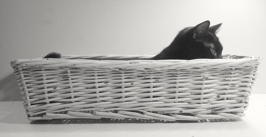 Cat Pastel - Lurking In The Basket by Bernadette Kazmarski