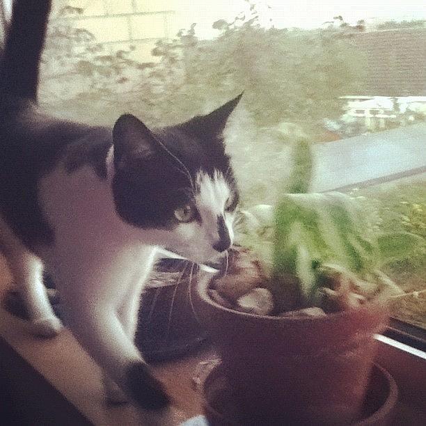 Pussy Photograph - Ma Baby Xxx #cat #cats by Megan Watts