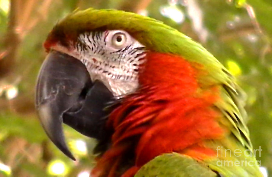Nature Photograph - Macaw Alert by John From CNY