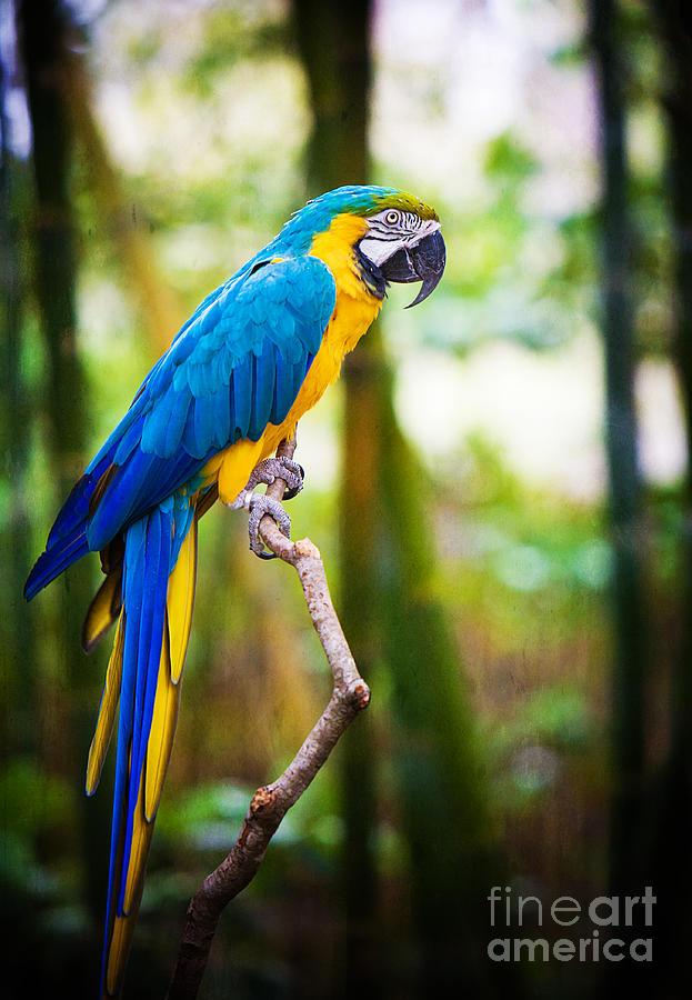 Macaw Photograph