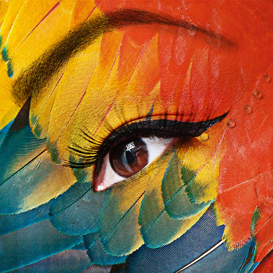 Human Eye Photograph - Macaw by Yosi Cupano