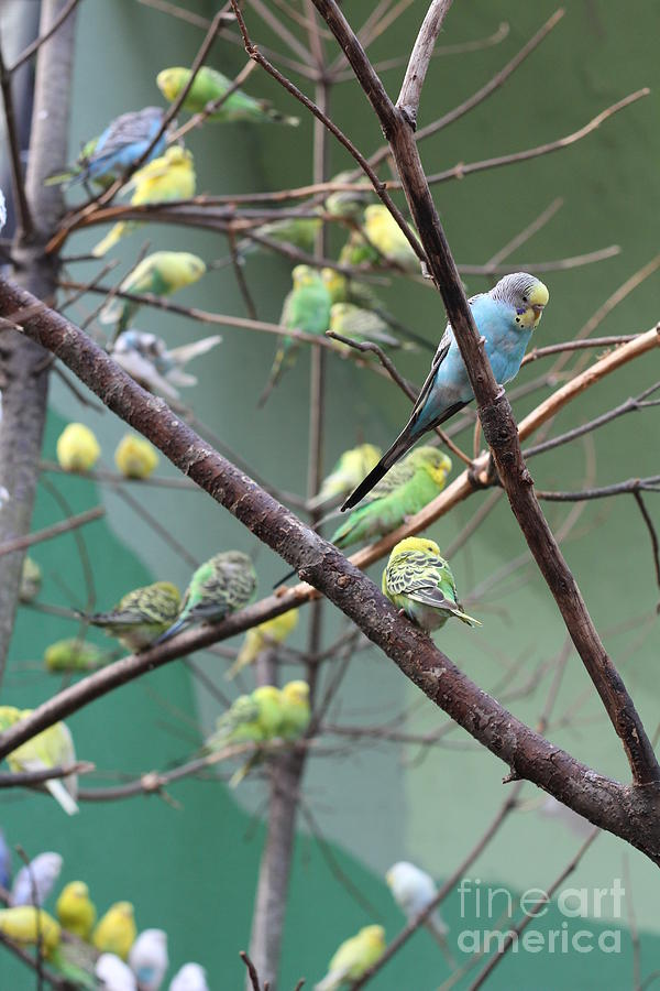 Bird Macaw Photograph - Macaw by Yuro Choi