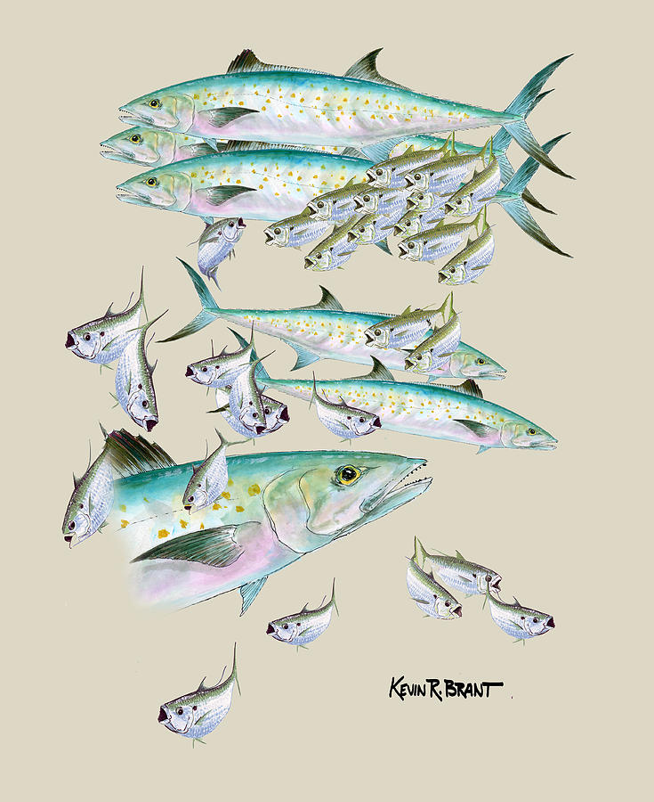 Mackerel Painting - Mackerel Montage by Kevin Brant