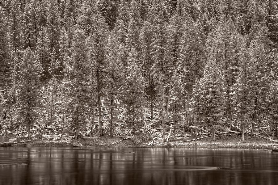 Snow Photograph - Madison River Yellowstone Bw by Steve Gadomski