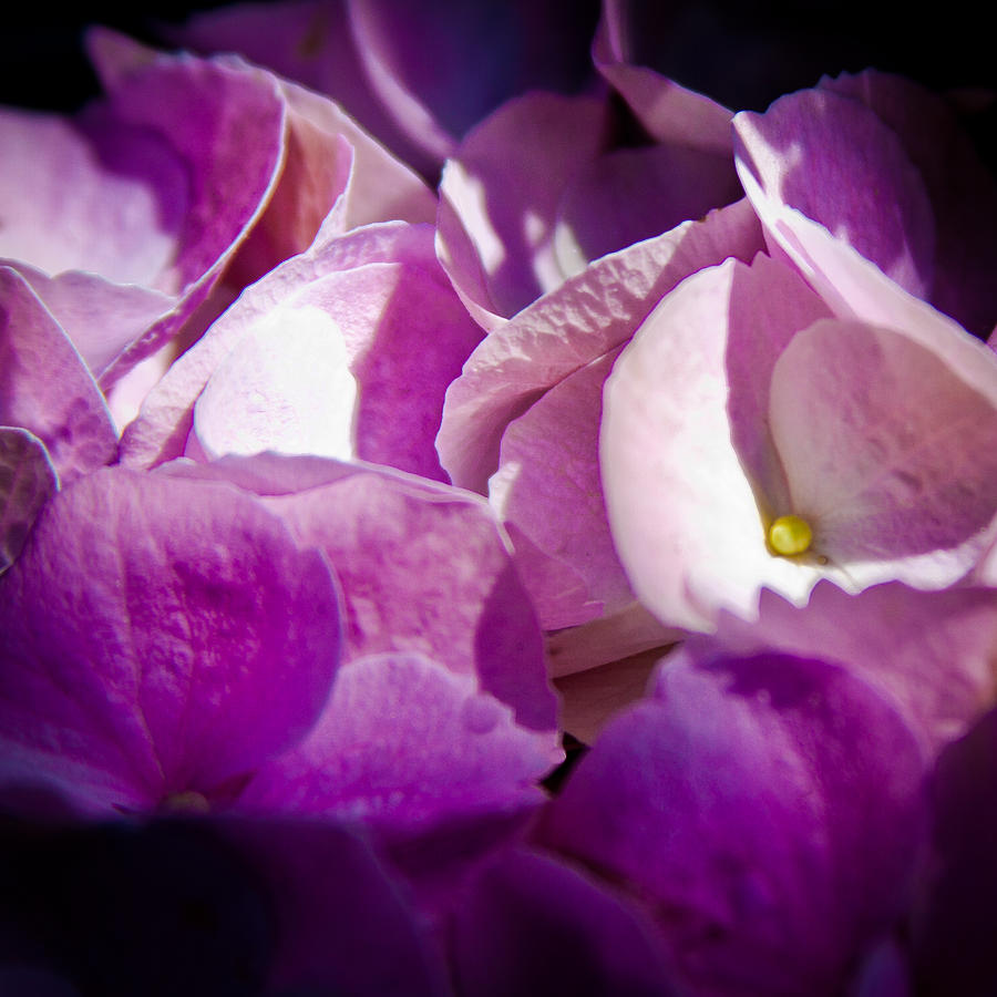 Magenta Photograph - Magenta Floral by David Patterson
