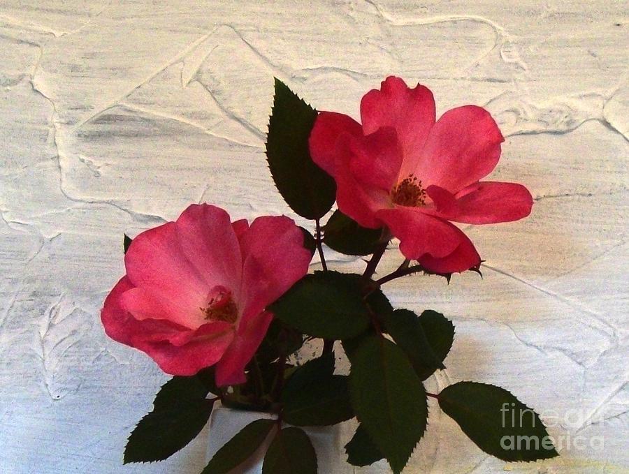 Photo Photograph - Magenta Roses by Marsha Heiken