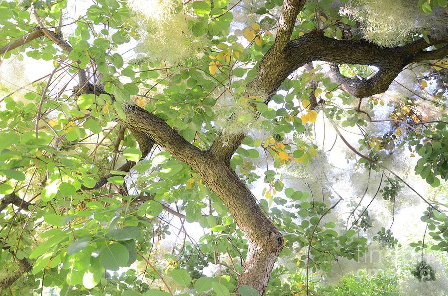 Backyard Photograph - Magic Bush by Bruno Santoro