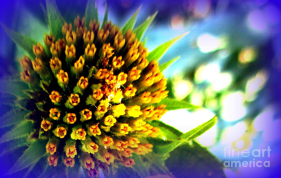 Flower Photograph - Magic Flower by Maria Scarfone