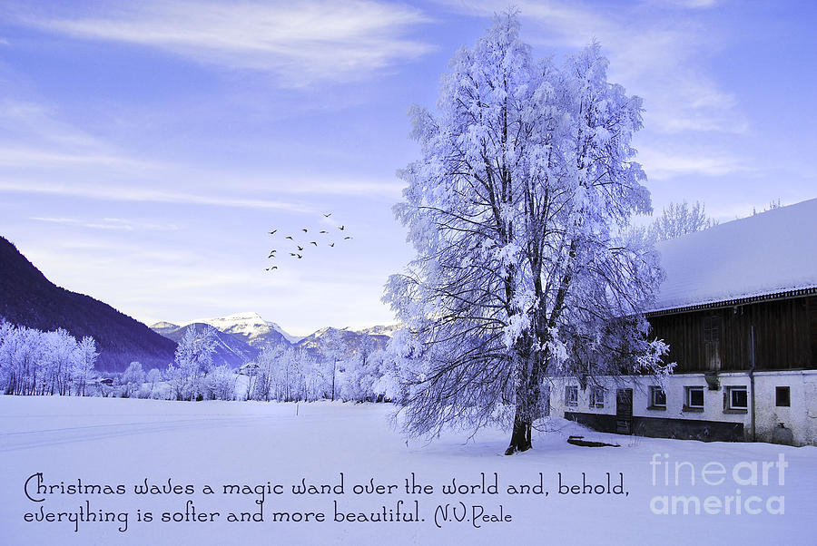 Winter Photograph - Magic Wand by Sabine Jacobs