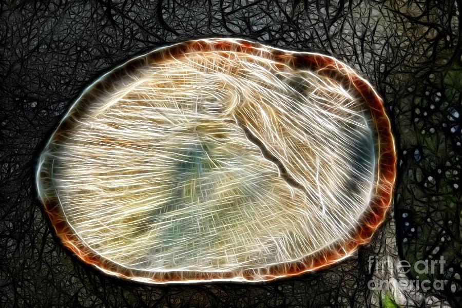 Magical Digital Art - Magical Tree Stump by Mariola Bitner