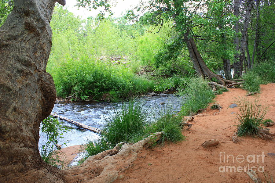 Arizona Landscape Photograph - Magical Trees At Red Rock Crossing by Carol Groenen