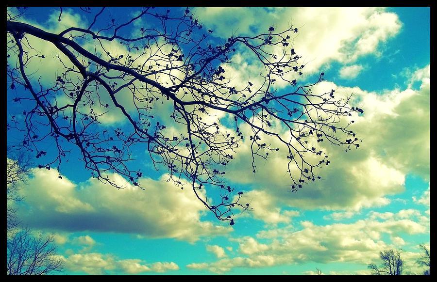 Magnolia Sky Digital Art by Jessica Thomas