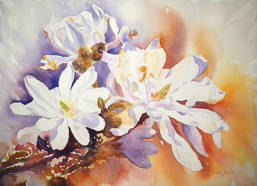 Magnolia Painting - Magnolia Stellata by Ruth Harris