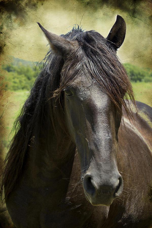 Horses Photograph - Majestic by Elizabeth Wilson