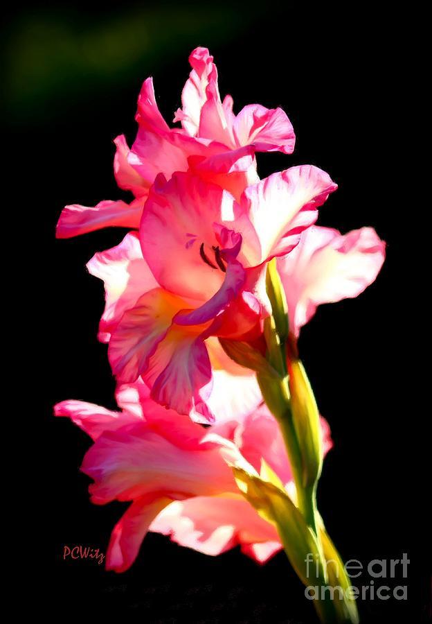 Majestic Photograph - Majestic Gladiolus by Patrick Witz