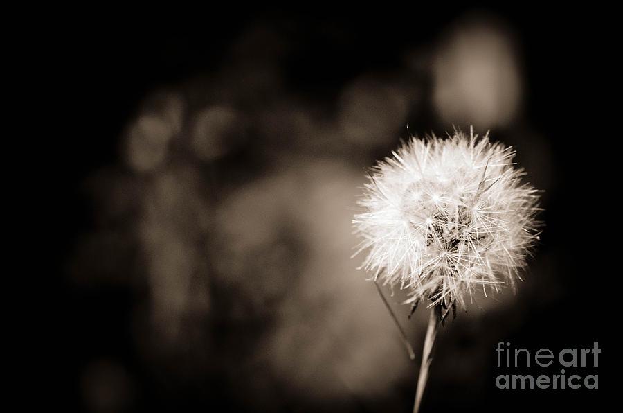 Wish Photograph - Make A Wish by Gwen McFadden