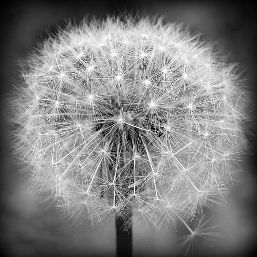 Make A Wish In Black And White Photograph By Michelle Jackson