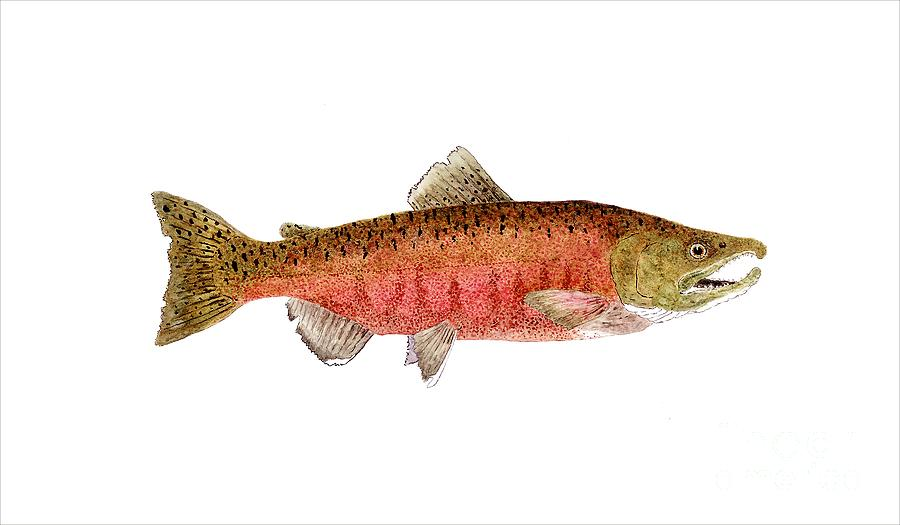 how to fish for chinook salmon