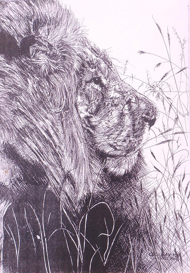 The Formidable Jaws Of A Male Lion Forces Respect. When They Peak Over The Grass Like This Painting - Male Lion From The Side by Cecilia Putter