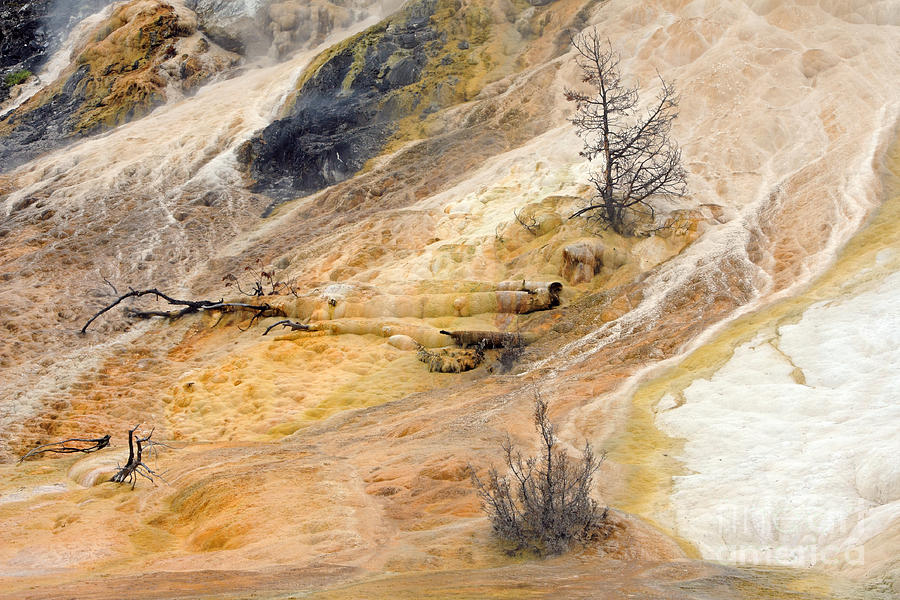 Yellowstone Photograph - Mammoth Hot Springs by Charline Xia