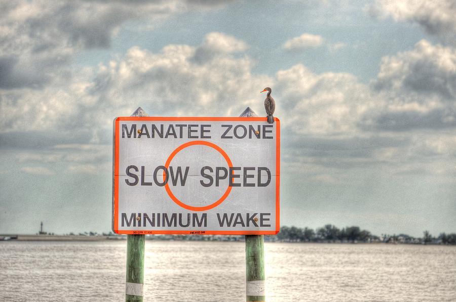 Great Blue Heron Digital Art - Manatee Zone by Barry R Jones Jr