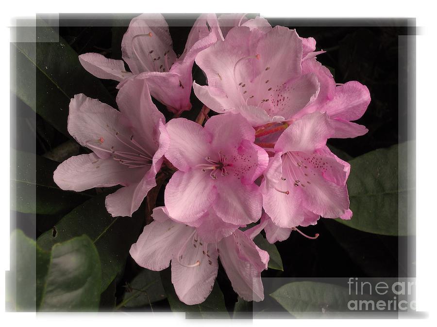 Flowers Photograph - Many Splendored Blooms by Judee Stalmack