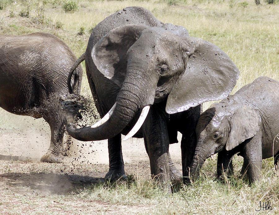 Elephants Spraying Mud Photograph - Mara Mud Bath by John Hebb