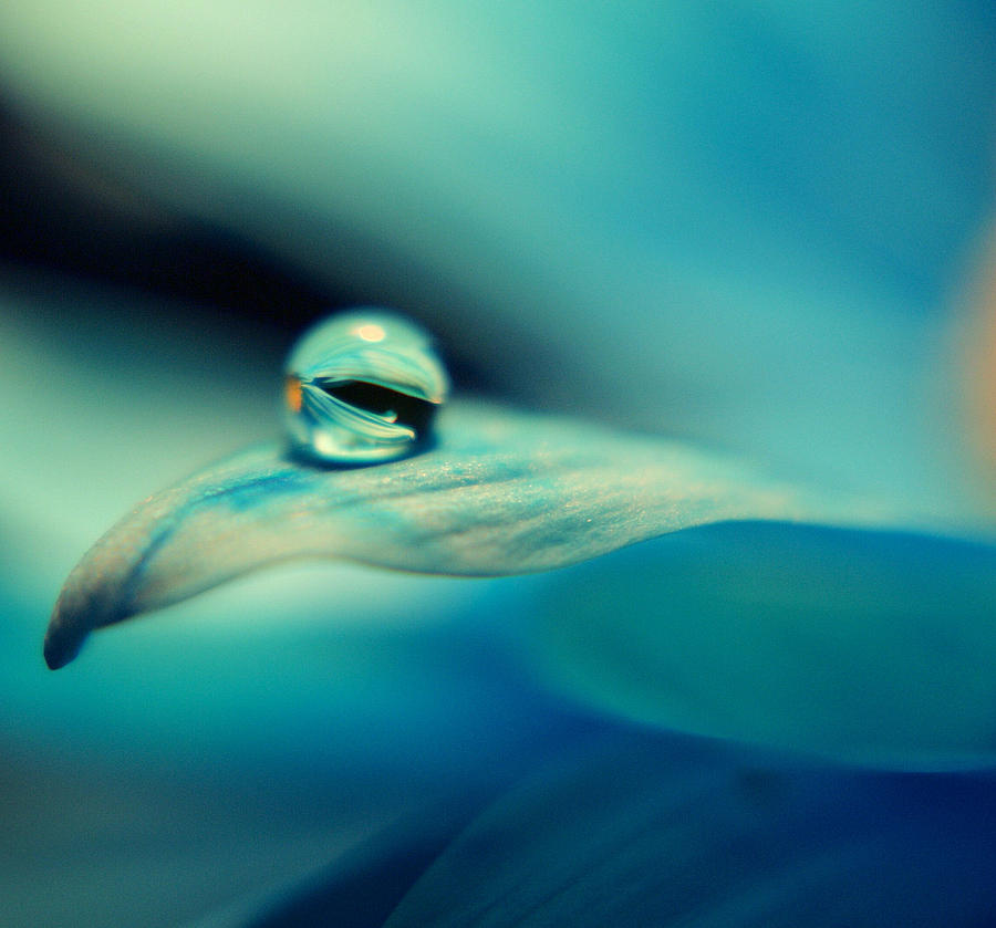 Flower Photograph - Marble Blue by Wendy Riley- Athans