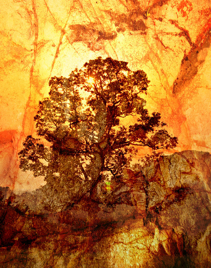 Tree Photograph - Marbled Tree by Marty Koch