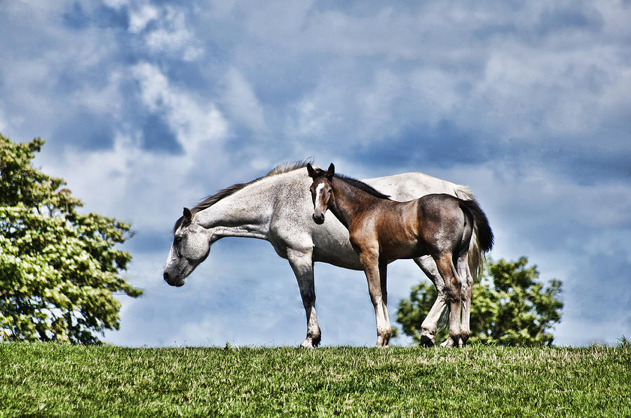 Mare And Foal Photograph - Mare And Foal by Steve Purnell