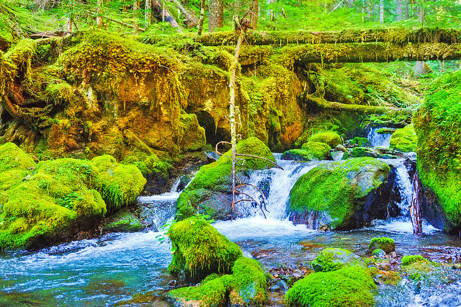 Olympic National Park Photograph - Marmot Creek Waterfalls by Alvin Kroon