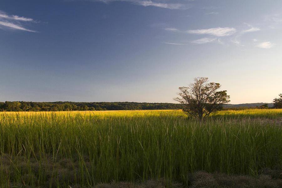 Marsh Photograph - Marsh by Bob Retnauer