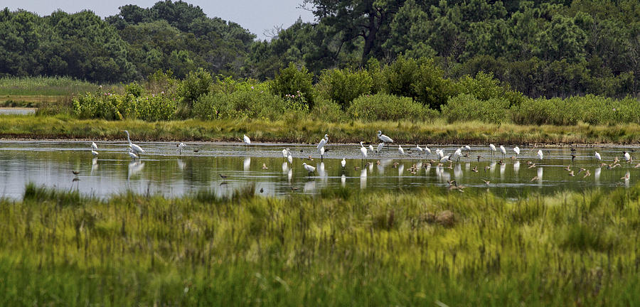 Salt Marsh Photograph - Marsh Life by Mary Jo Taft