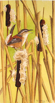 Birds Painting - Marsh Wren by Bill Gehring