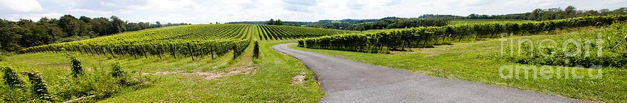 Landscape Photograph - Maryland Vineyard Panorama by Thomas Marchessault