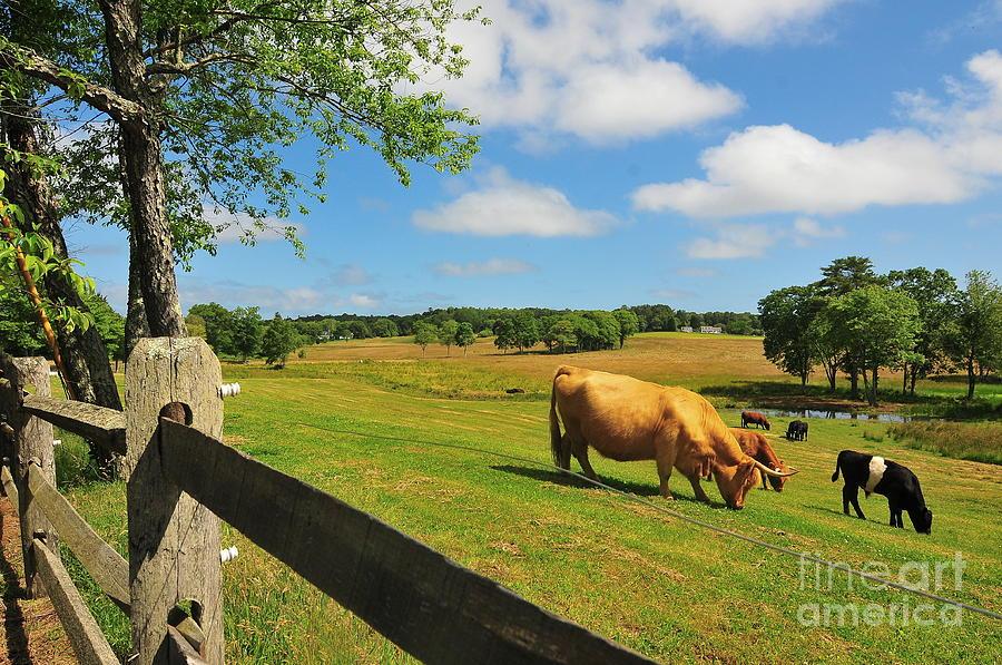 New England Photograph - Massachusetts Farm by Catherine Reusch Daley