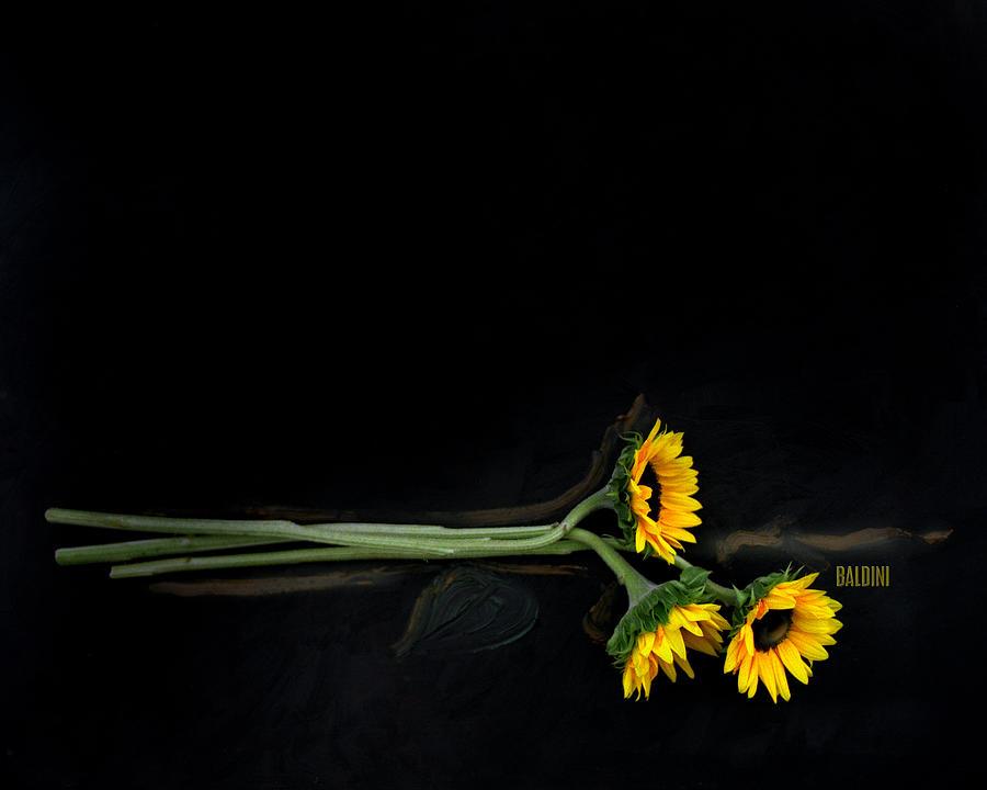 Sun Flower Photograph - Master Sunflowers by J R Baldini M Photog
