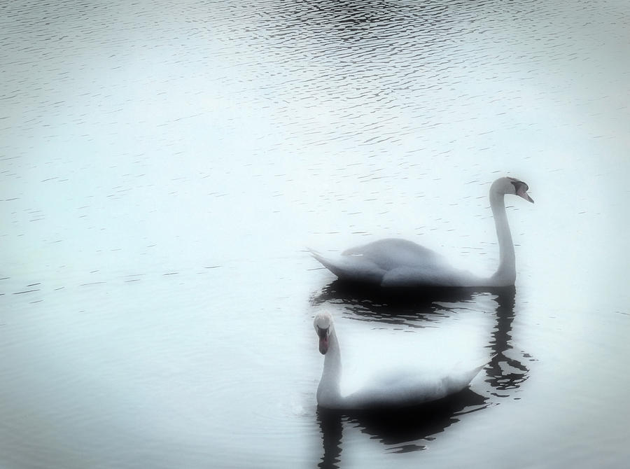 Swan Photograph - Mates For Life by Kenneth Krolikowski